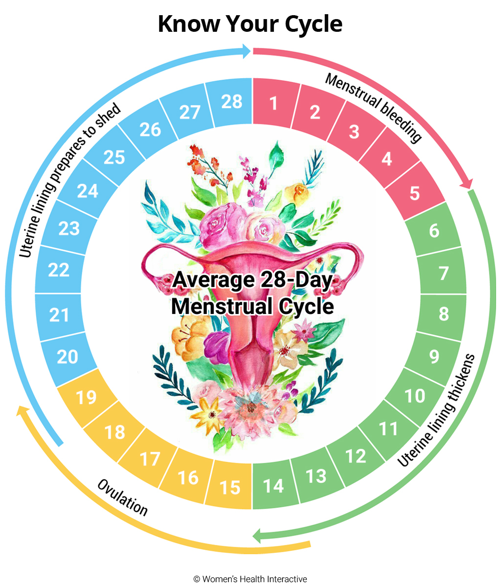 Infographic Illustrating A Typical 28 Day Menstrual Cycle