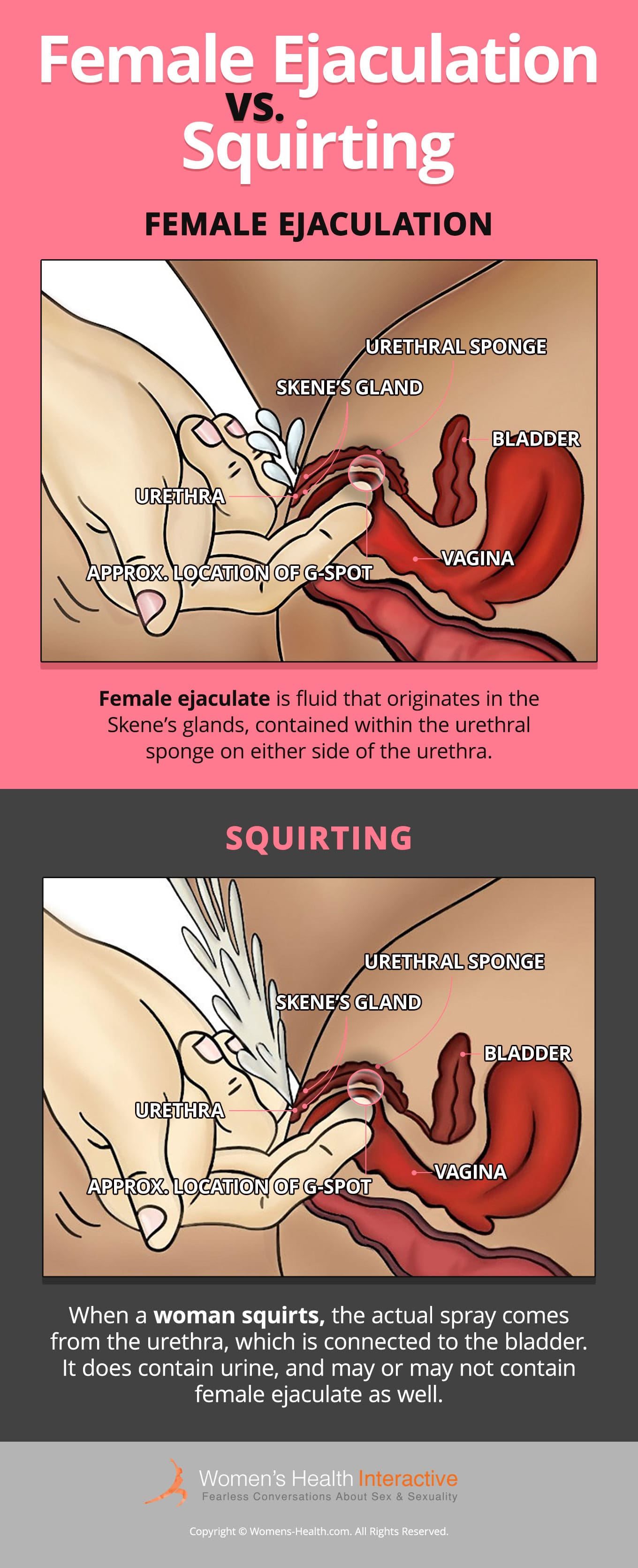 An Infographic Illustrating The Differences Between Female Ejaculation And Squirting