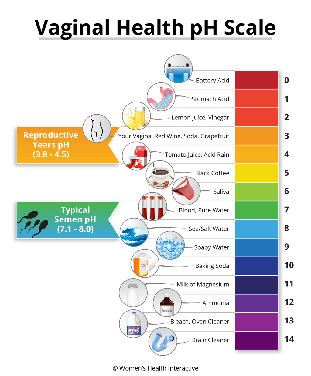 Color-Coded pH Infographic Chart Showing Vaginal pH Levels Compared To Everyday Items